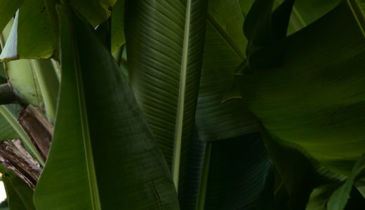 女子旅おすすめ「タヒチ島」観光スポット紹介!太平洋の真珠、最後の楽園タヒチ!