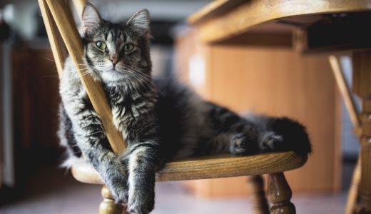 アメリカ、NY猫カフェは日本と異なるシステム・目的が?!シェルター保護猫の里親探し