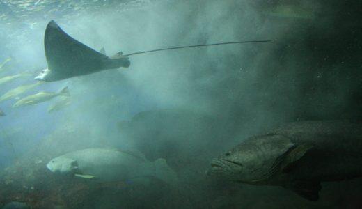空飛ぶエイの大群も?!メキシコ、バハカリフォルニアの水族館紹介![世界ふしぎ発見]