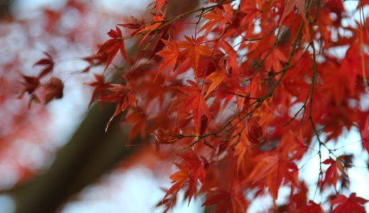 紅葉狩りとは?「狩り」の意味・由来は?桜狩りとは?紅葉狩りベストシーズンは?