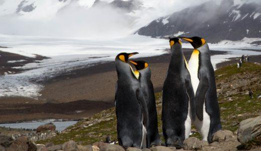 なぜペンギンの色はお腹は白く、背中は黒い?よちよちする歩き方の理由は?