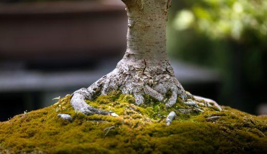 日本伝統工芸、如雨露(ジョウロ)製造、根岸産業・根岸陽一さん!園芸用じょうろ特徴
