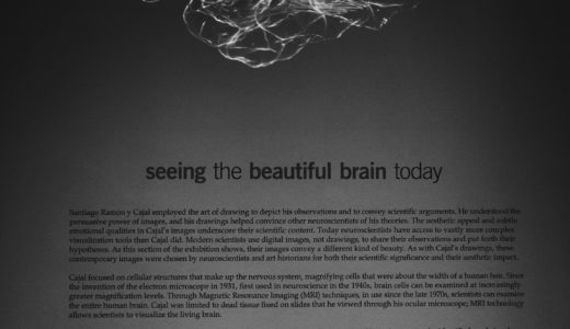 IQ188天才頭脳の日本人は太田三砂貴さん?アインシュタインに匹敵!知能指数とは?