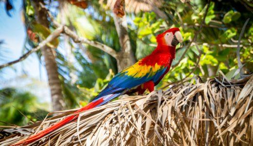 世界遺産チリビケテ国立公園は南米コロンビア大秘境!ジャガーのマロカ、テプイ卓上大地