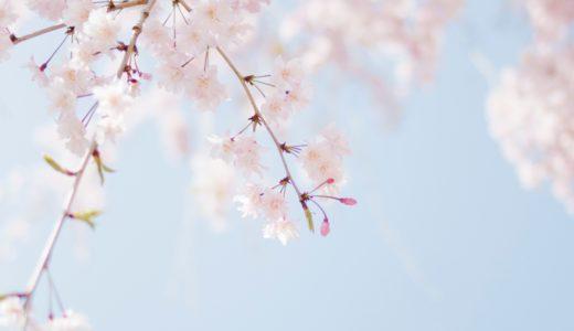 桜・梅・桃の花、特徴と違いは?見分け方ポイントは開花時期、つぼみ、花びら、花柄、幹