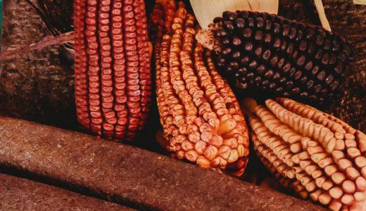 レジスタントスターチとは?難溶性デンプンの作用と多い食品は穀類・いも類・豆類!?