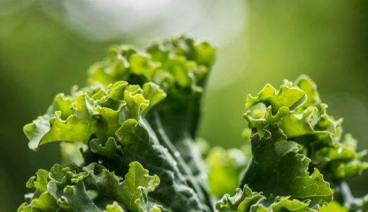 ネバネバする食材はなぜ健康に良い!?粘つく野菜の種類、栄養成分と健康への働きは?