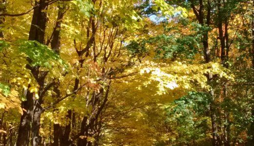 モンサンブルーノ国立公園の歴史!モントリオール近郊の自然満喫・観光ハイキング②
