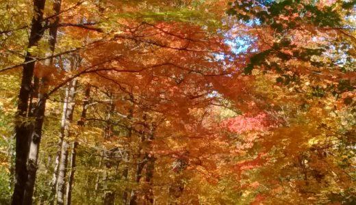 モンサンブルーノ国立公園(モントリオール近郊)観光旅行・自然満喫・紅葉・ハイキング