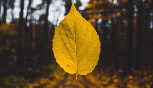 紅葉はなぜ起こる?秋に葉の色が黄色に変化するのは色素カロテノイドが原因?①