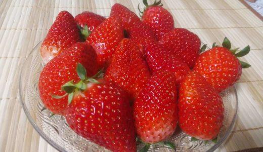 いちご「あまおう」とは?福岡の特産イチゴの名前の由来と特徴!甘く、美味しい旬の時期は?