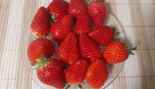 いちご(イチゴ/苺)の栄養成分、健康への効果!美味しいイチゴの気になるカロリーは?
